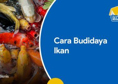 Cara Budidaya Ikan